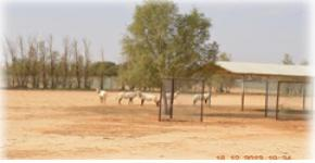 زيارة علمية وترفيهية لمركز ابحاث الملك خالد للحياة الفطرية
